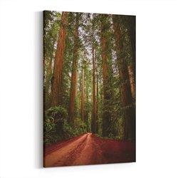 Gökyüzüne uzanan ağaçlar Kanvas Tablosu