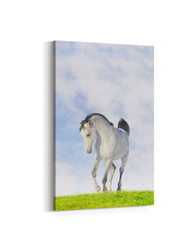 Çimler Üzerinde Beyaz At Kanvas Tablo