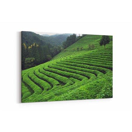 Çay Tarlası Kanvas Tablosu
