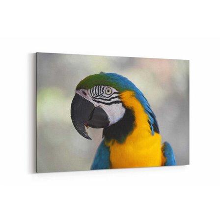 Papağan Kuşu Kanvas Tablosu