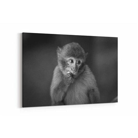 Şempanze Kanvas Tablosu
