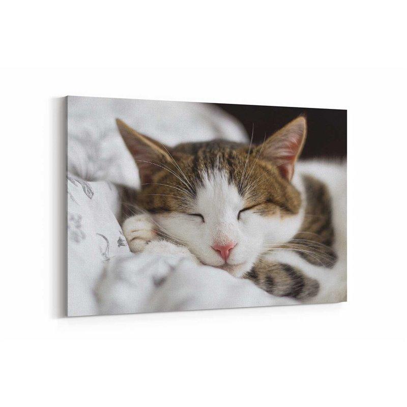 Uyuyan Kedi Kanvas Tablosu