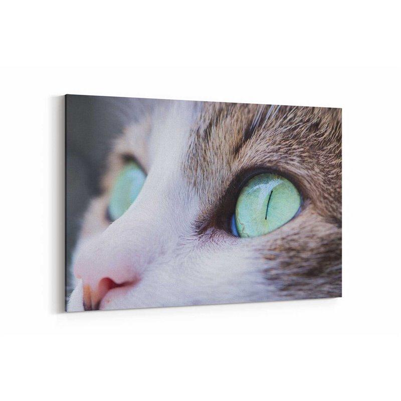 Kedi Gözleri Kanvas Tablosu