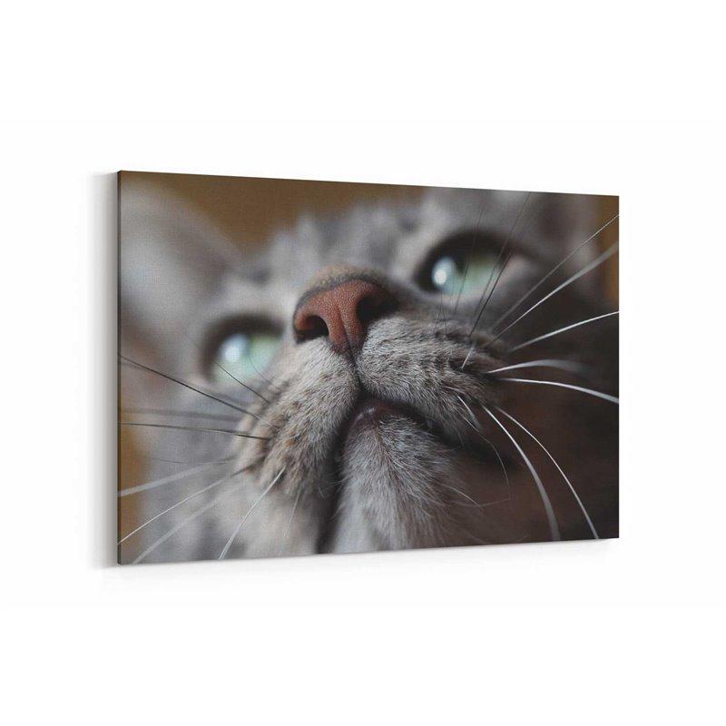 Kedi Bıyıkları Kanvas Tablosu