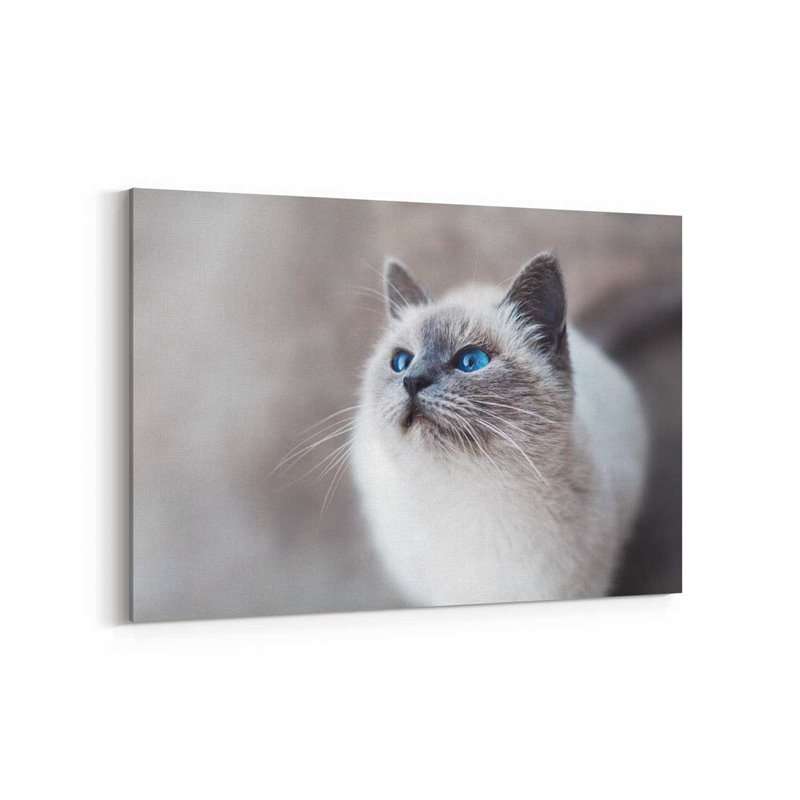 Beyaz Kedi Kanvas Tablosu