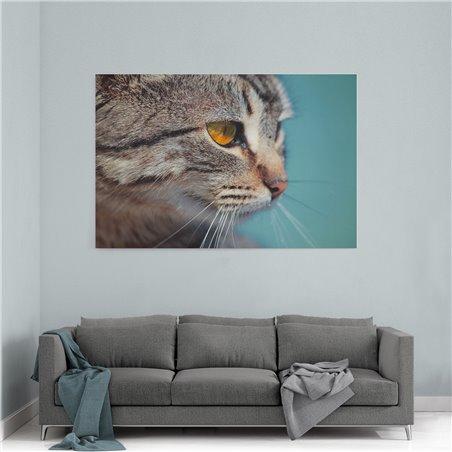 Yakın Çekim Kedi Kanvas Tablosu