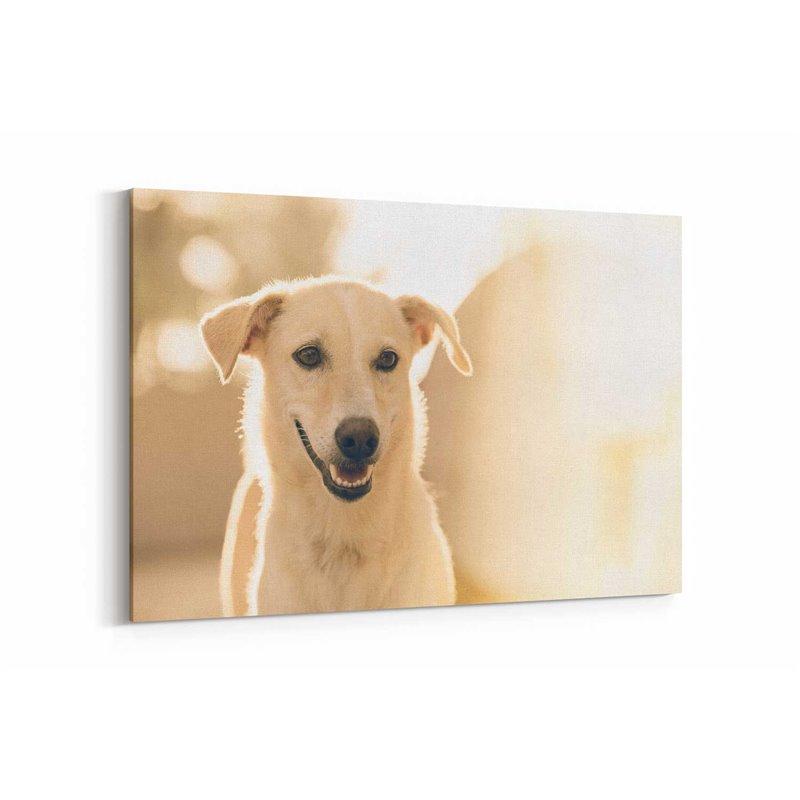 Beyaz Köpek Kanvas Tablosu