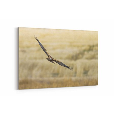 Uçan Baykuş Kanvas Tablosu