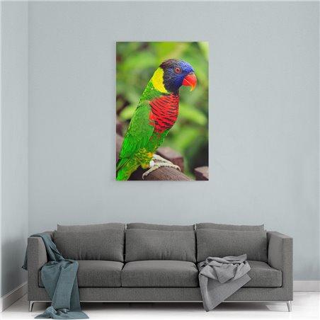 Renkli Papağan Kanvas Tablosu