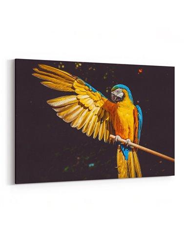 Makav Papağanı Kanvas Tablo
